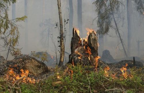 Прогорел на 700 тысяч. Житель Троицкого района возместит ущерб, нанесённый Увельскому лесничеству