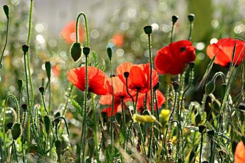 Искоренить зло. За излишнюю любовь к «цветочкам» можно попасть под статью