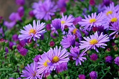 1300 «квадратов» красоты. Ярких цветочных зон в районном центре становится больше