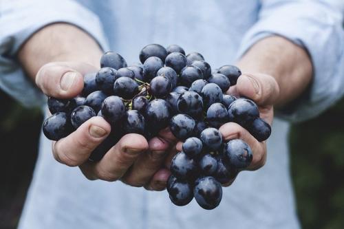 Винограду здесь рады! Ягодный фестиваль подарит южноуральцам вкус настоящего лета