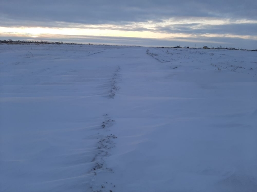 «Жалоб не поступало». В администрации Петровского поселения заверили: снег на дорогах убирают