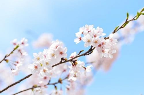 Ещё немного, ещё чуть-чуть… Любителям отдохнуть на природе в майские праздники придётся подождать